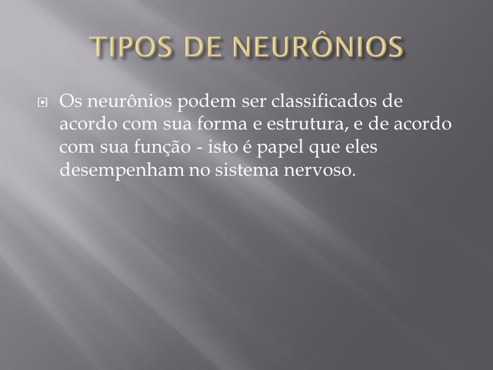 Os neurônios podem ser classificados de acordo com sua forma e estrutura, e de acordo com sua função - isto é papel que eles desempenham no sistema ne