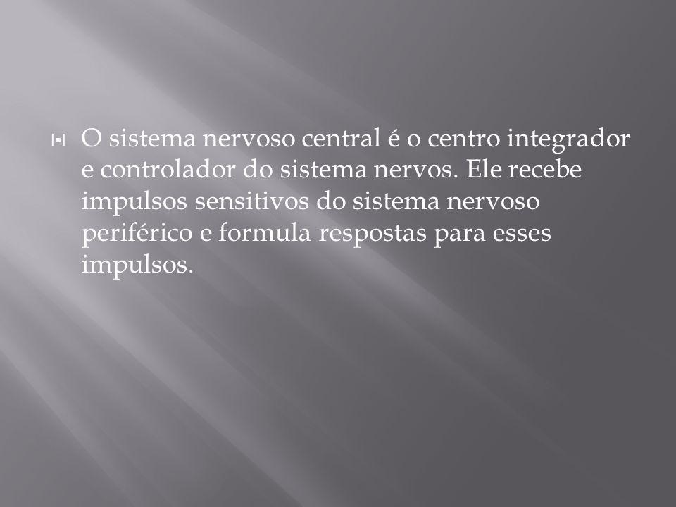 O sistema nervoso central é o centro integrador e controlador do sistema nervos. Ele recebe impulsos sensitivos do sistema nervoso periférico e formul