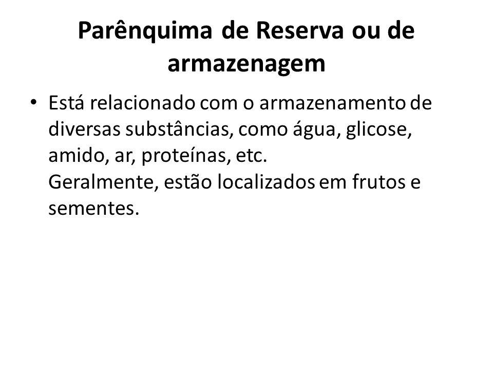 Parênquima de Reserva ou de armazenagem Está relacionado com o armazenamento de diversas substâncias, como água, glicose, amido, ar, proteínas, etc. G