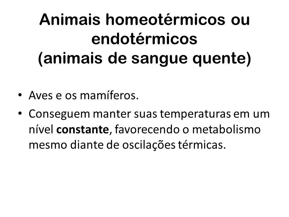 Animais homeotérmicos ou endotérmicos (animais de sangue quente) Aves e os mamíferos. Conseguem manter suas temperaturas em um nível constante, favore