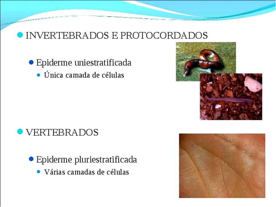 Animais heterotérmicos ou ectotérmicos (animais de sangue frio) Invertebrados, Peixes, Anfíbios e Répteis.