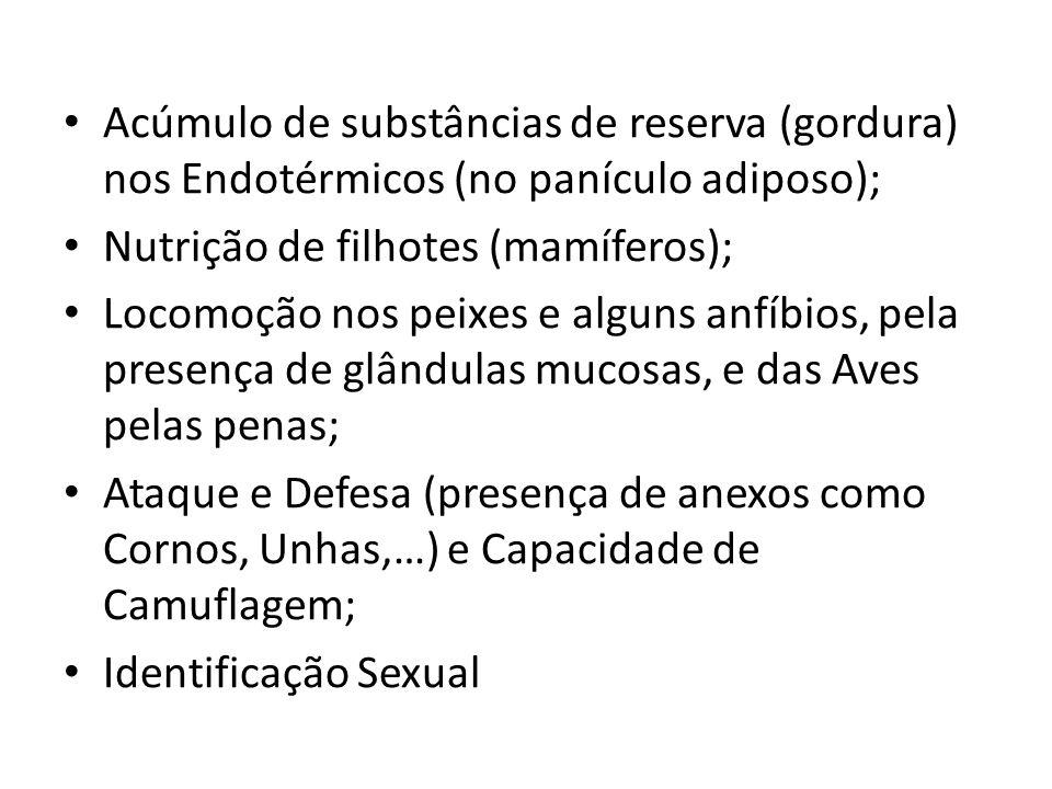 Acúmulo de substâncias de reserva (gordura) nos Endotérmicos (no panículo adiposo); Nutrição de filhotes (mamíferos); Locomoção nos peixes e alguns an