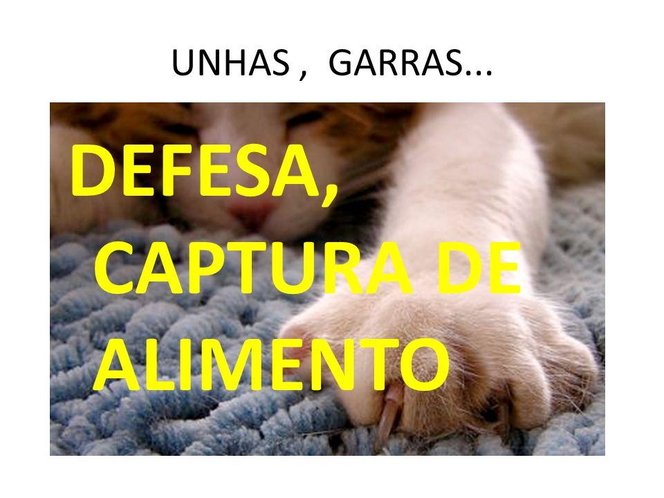 UNHAS, GARRAS... DEFESA, CAPTURA DE ALIMENTO