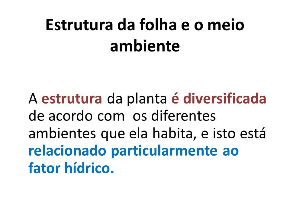 Estrutura da folha e o meio ambiente A estrutura da planta é diversificada de acordo com os diferentes ambientes que ela habita, e isto está relaciona