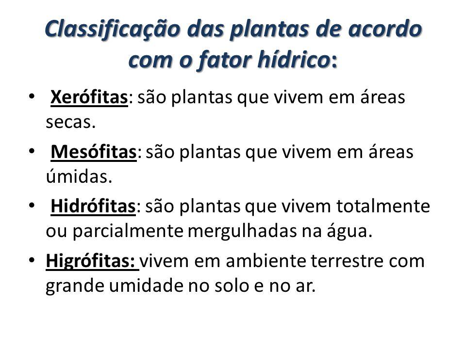 Classificação das plantas de acordo com o fator hídrico: Xerófitas: são plantas que vivem em áreas secas. Mesófitas: são plantas que vivem em áreas úm