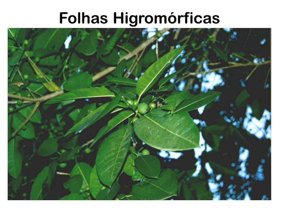 Folhas Higromórficas