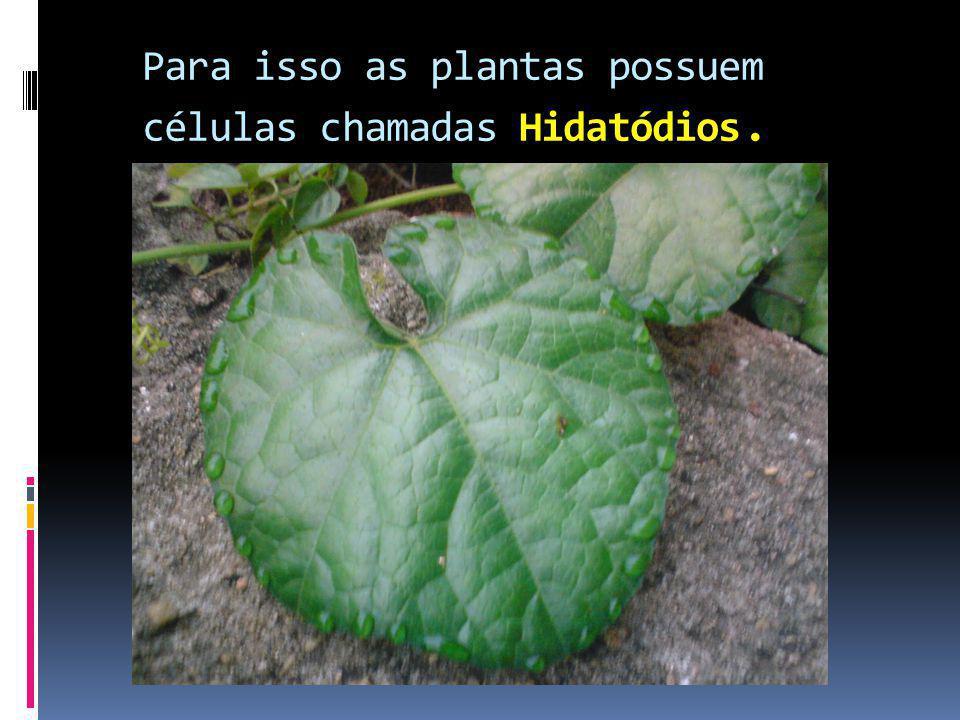 Hidatódios Para isso as plantas possuem células chamadas Hidatódios.