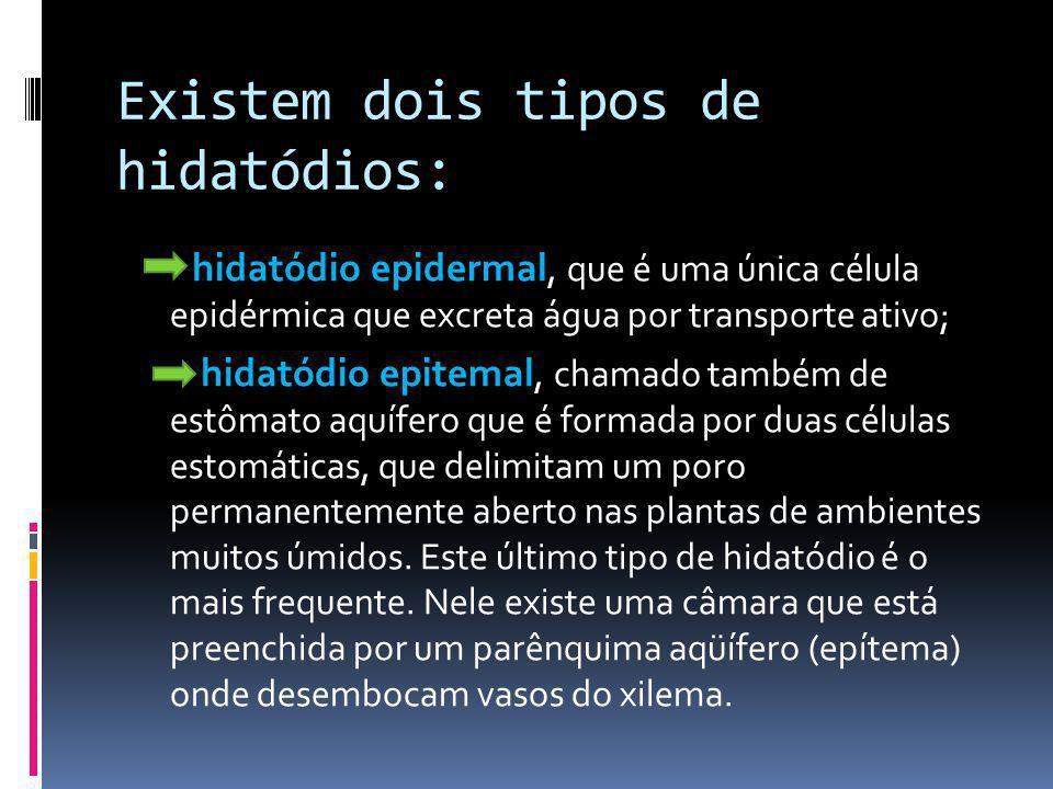 Existem dois tipos de hidatódios: hidatódio epidermal, que é uma única célula epidérmica que excreta água por transporte ativo; hidatódio epitemal, ch