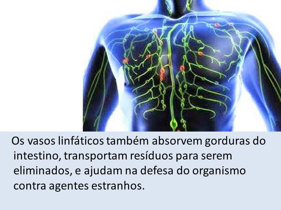 Os vasos linfáticos também absorvem gorduras do intestino, transportam resíduos para serem eliminados, e ajudam na defesa do organismo contra agentes
