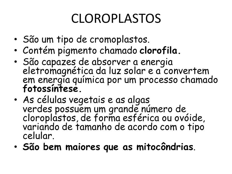 CLOROPLASTOS São um tipo de cromoplastos. Contém pigmento chamado clorofila. São capazes de absorver a energia eletromagnética da luz solar e a conver