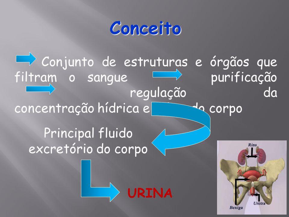 Conceito Conjunto de estruturas e órgãos que filtram o sangue purificação regulação da concentração hídrica e salina do corpo Principal fluido excretó