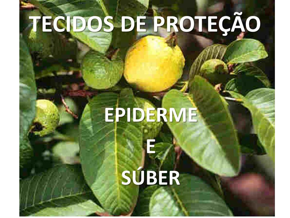 TECIDOS DE PROTEÇÃO EPIDERMEESÚBER