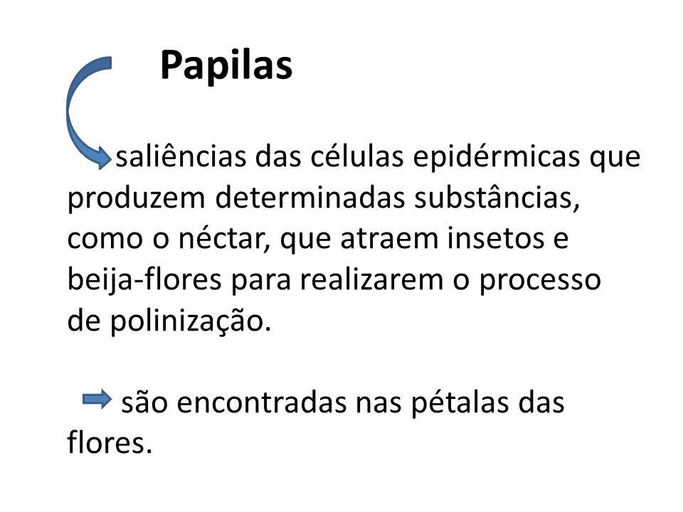 Papilas saliências das células epidérmicas que produzem determinadas substâncias, como o néctar, que atraem insetos e beija-flores para realizarem o p