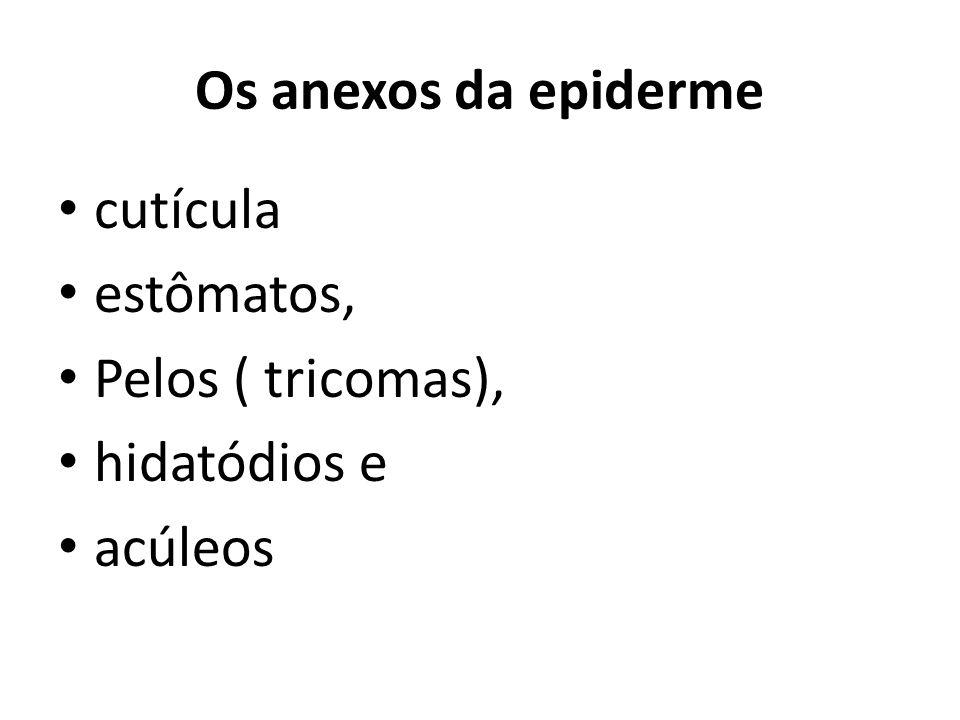 Os anexos da epiderme cutícula estômatos, Pelos ( tricomas), hidatódios e acúleos