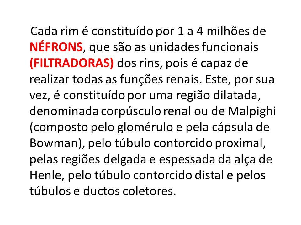 Cada rim é constituído por 1 a 4 milhões de NÉFRONS, que são as unidades funcionais (FILTRADORAS) dos rins, pois é capaz de realizar todas as funções