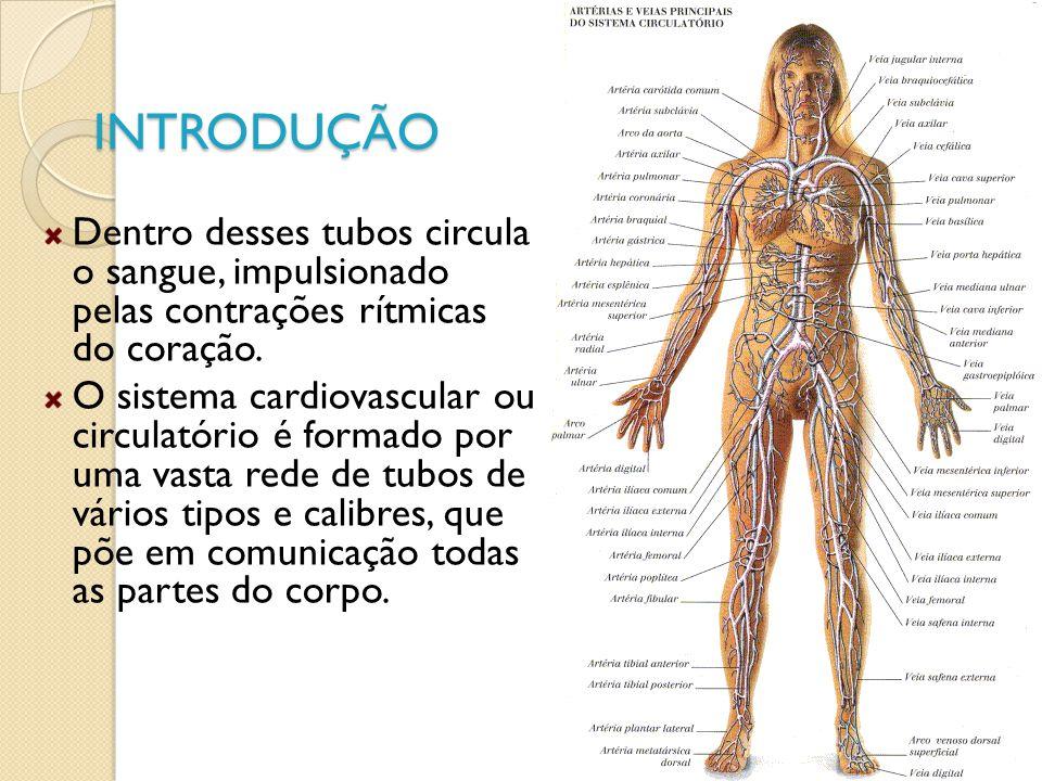 INTRODUÇÃO Dentro desses tubos circula o sangue, impulsionado pelas contrações rítmicas do coração. O sistema cardiovascular ou circulatório é formado