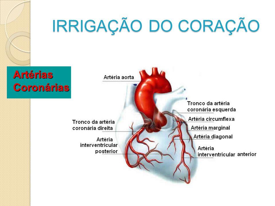 IRRIGAÇÃO DO CORAÇÃO ArtériasCoronárias