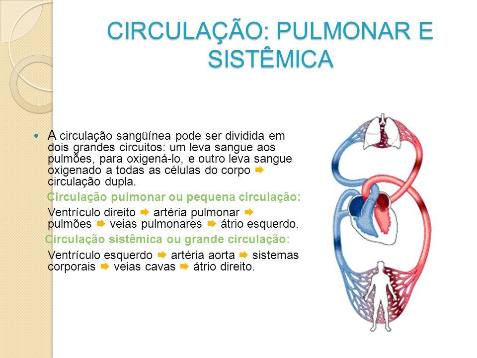 CIRCULAÇÃO: PULMONAR E SISTÊMICA A circulação sangüínea pode ser dividida em dois grandes circuitos: um leva sangue aos pulmões, para oxigená-lo, e ou