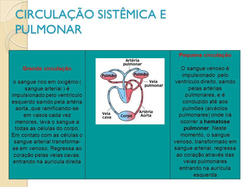 CIRCULAÇÃO SISTÊMICA E PULMONAR Grande circulação o sangue rico em oxigênio ( sangue arterial ) é impulsionado pelo ventrículo esquerdo saindo pela ar