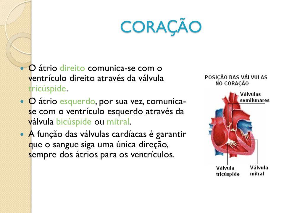CORA Ç ÃO O átrio direito comunica-se com o ventrículo direito através da válvula tricúspide. O átrio esquerdo, por sua vez, comunica- se com o ventrí