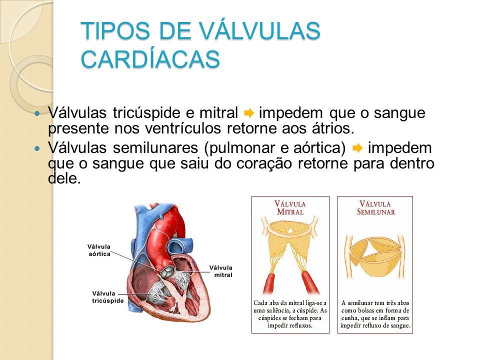 TIPOS DE VÁLVULAS CARDÍACAS Válvulas tricúspide e mitral impedem que o sangue presente nos ventrículos retorne aos átrios. Válvulas semilunares (pulmo