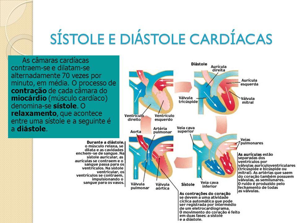 S Í STOLE E DI Á STOLE CARD Í ACAS As câmaras cardíacas contraem-se e dilatam-se alternadamente 70 vezes por minuto, em média. O processo de contração