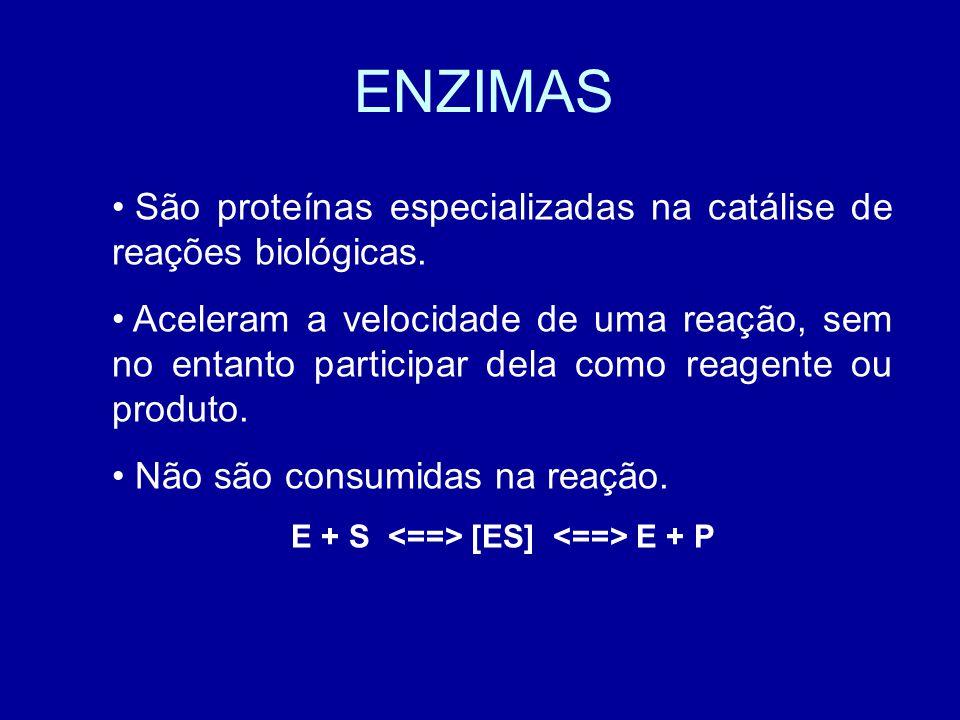 ENZIMAS São proteínas especializadas na catálise de reações biológicas.