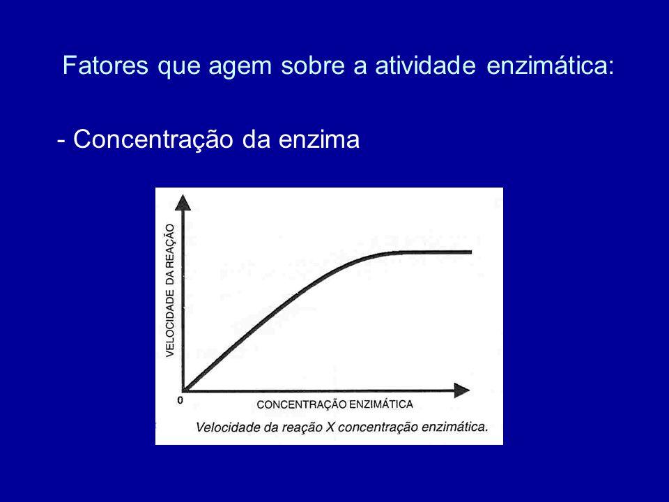 Fatores que agem sobre a atividade enzimática: - Concentração da enzima