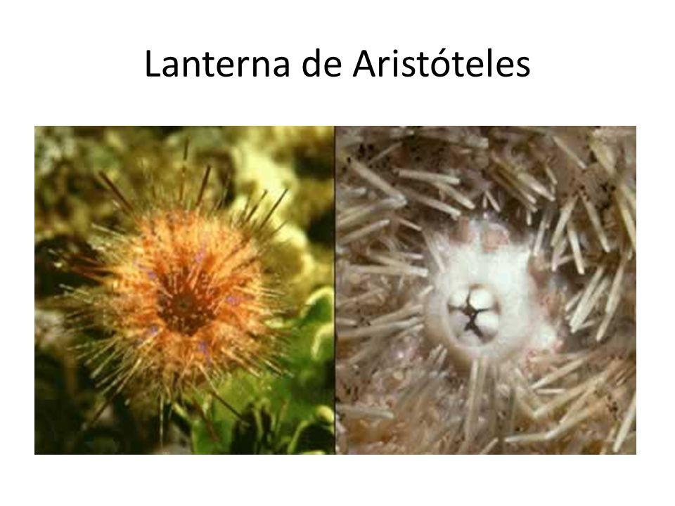 Lanterna de Aristóteles