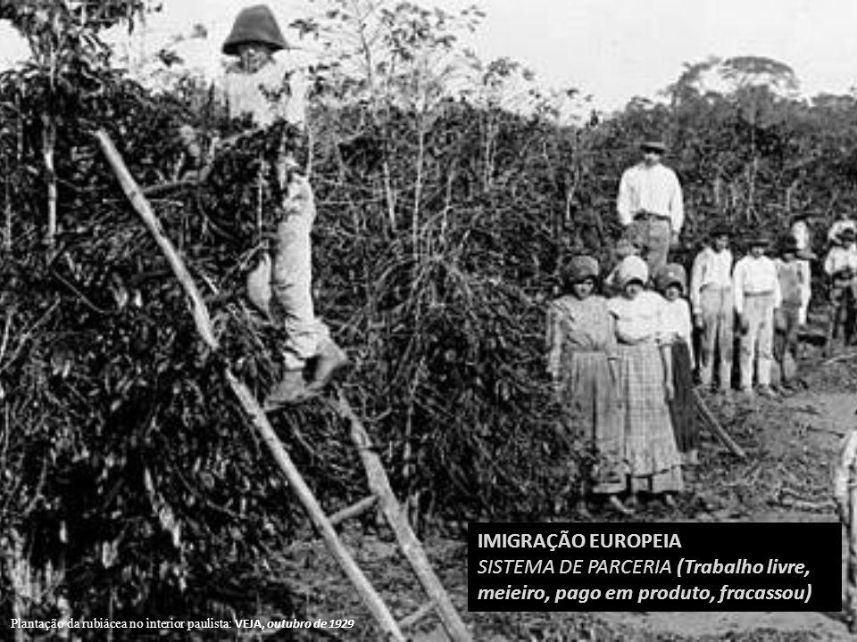 IMIGRAÇÃO EUROPEIA SISTEMA DE PARCERIA (Trabalho livre, meieiro, pago em produto, fracassou) Plantação da rubiácea no interior paulista: VEJA, outubro