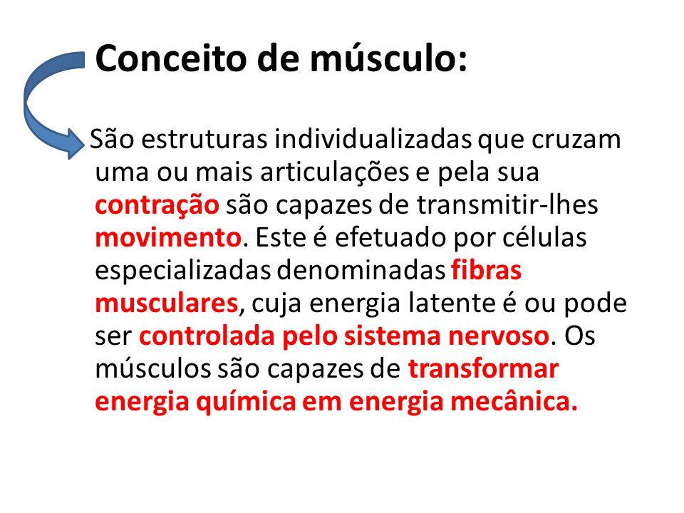 Conceito de músculo: São estruturas individualizadas que cruzam uma ou mais articulações e pela sua contração são capazes de transmitir-lhes movimento