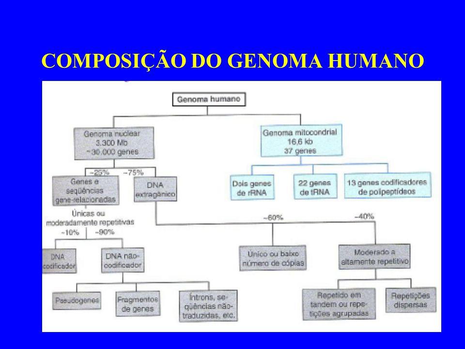 COMPOSIÇÃO DO GENOMA HUMANO