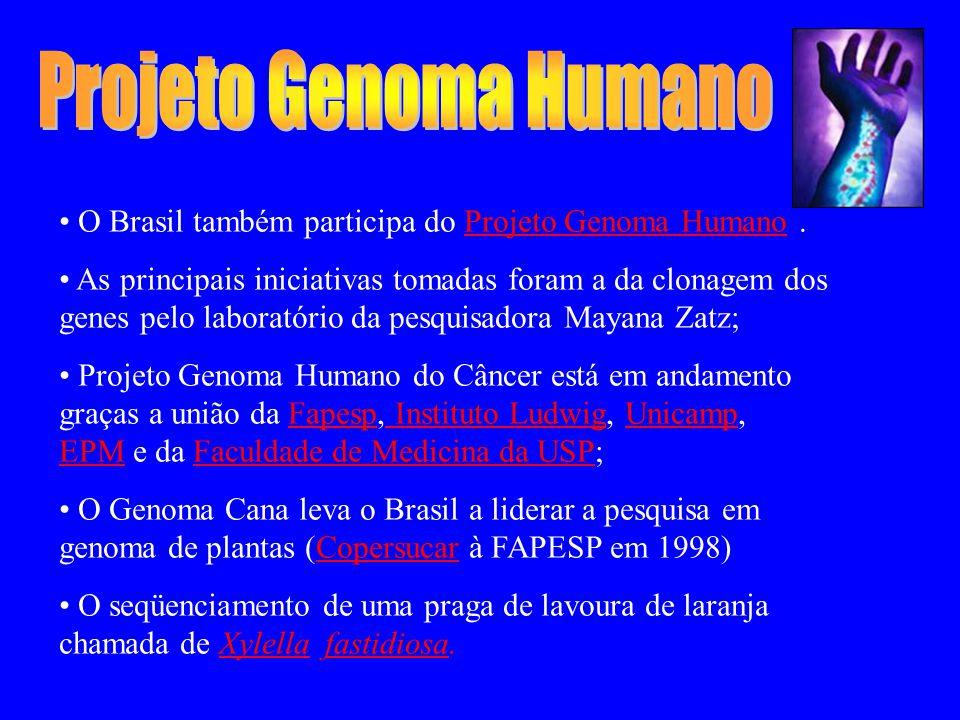 O Brasil também participa do Projeto Genoma Humano.Projeto Genoma Humano As principais iniciativas tomadas foram a da clonagem dos genes pelo laboratório da pesquisadora Mayana Zatz; Projeto Genoma Humano do Câncer está em andamento graças a união da Fapesp, Instituto Ludwig, Unicamp, EPM e da Faculdade de Medicina da USP;Fapesp Instituto LudwigUnicamp EPMFaculdade de Medicina da USP O Genoma Cana leva o Brasil a liderar a pesquisa em genoma de plantas (Copersucar à FAPESP em 1998)Copersucar O seqüenciamento de uma praga de lavoura de laranja chamada de Xylella fastidiosa.Xylella