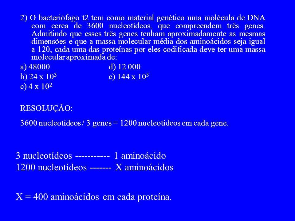 2) O bacteriófago t2 tem como material genético uma molécula de DNA com cerca de 3600 nucleotídeos, que compreendem três genes.