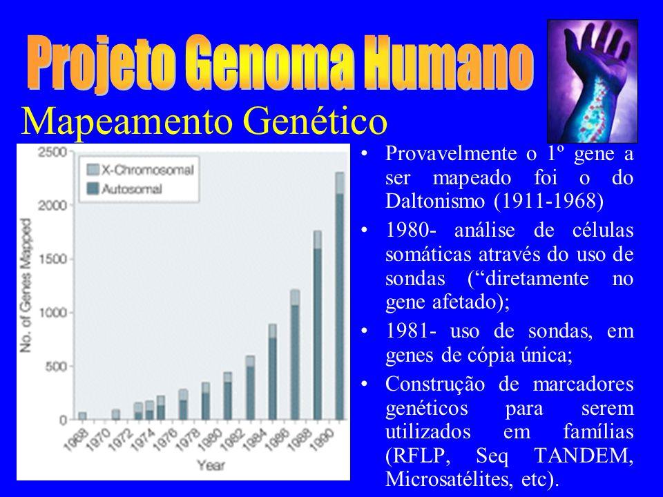 Mapeamento Genético Provavelmente o 1º gene a ser mapeado foi o do Daltonismo (1911-1968) 1980- análise de células somáticas através do uso de sondas (diretamente no gene afetado); 1981- uso de sondas, em genes de cópia única; Construção de marcadores genéticos para serem utilizados em famílias (RFLP, Seq TANDEM, Microsatélites, etc).