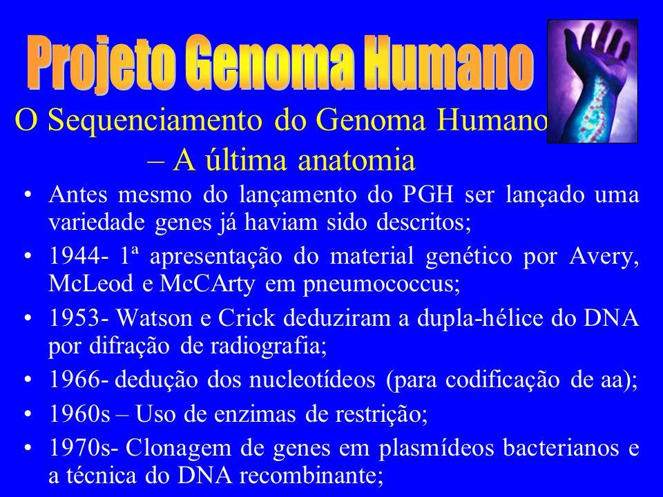 O Sequenciamento do Genoma Humano – A última anatomia Antes mesmo do lançamento do PGH ser lançado uma variedade genes já haviam sido descritos; 1944- 1ª apresentação do material genético por Avery, McLeod e McCArty em pneumococcus; 1953- Watson e Crick deduziram a dupla-hélice do DNA por difração de radiografia; 1966- dedução dos nucleotídeos (para codificação de aa); 1960s – Uso de enzimas de restrição; 1970s- Clonagem de genes em plasmídeos bacterianos e a técnica do DNA recombinante;
