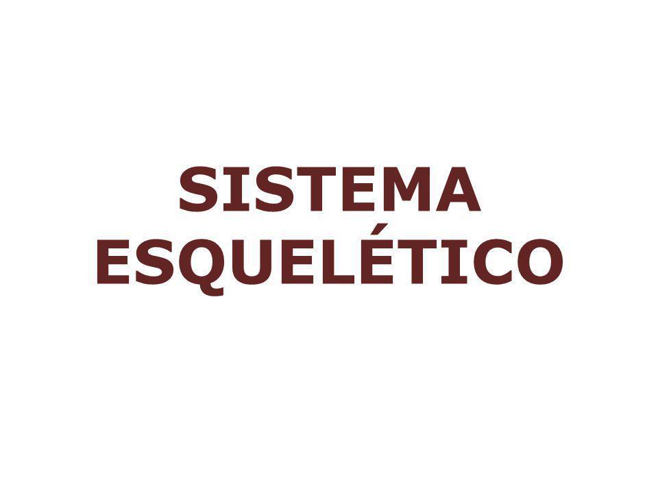 ARTRÓPODES: EXOESQUELETO DE QUITINA