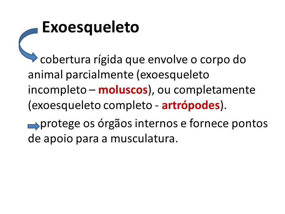 Exoesqueleto cobertura rígida que envolve o corpo do animal parcialmente (exoesqueleto incompleto – moluscos), ou completamente (exoesqueleto completo