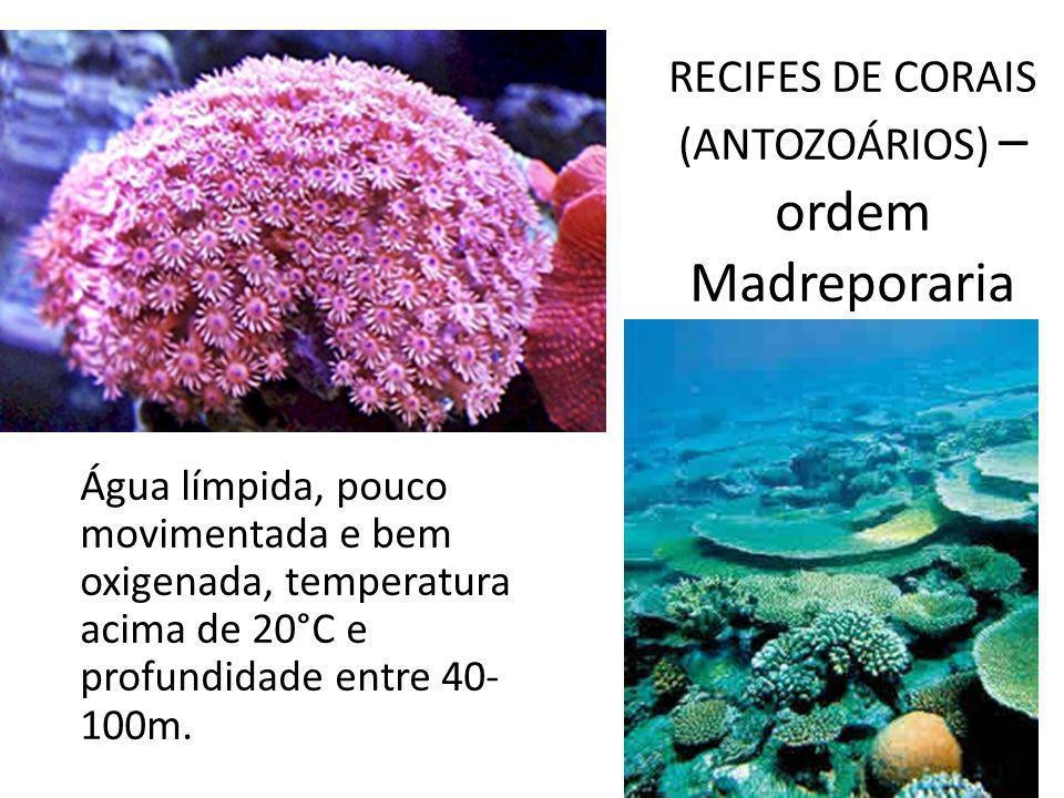 RECIFES DE CORAIS (ANTOZOÁRIOS) – ordem Madreporaria Água límpida, pouco movimentada e bem oxigenada, temperatura acima de 20°C e profundidade entre 4