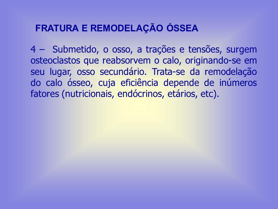 FRATURA E REMODELAÇÃO ÓSSEA 1 – Fratura (traumatismo): rompimento de vasos do periósteo. 2 – Restos celulares e coágulos sanguíneos são removidos pela