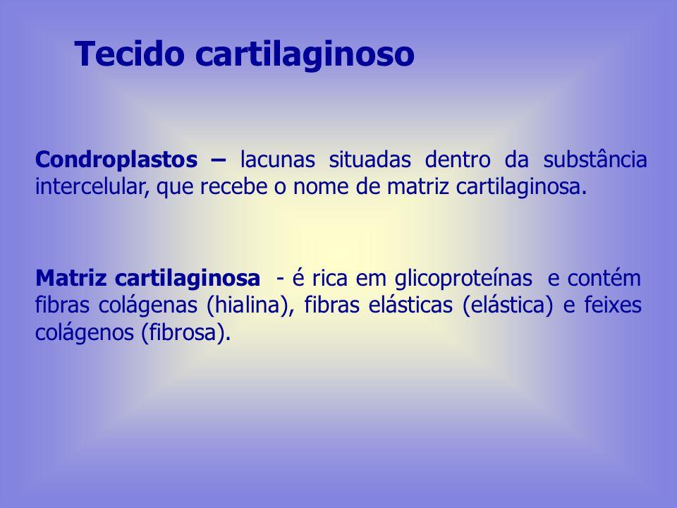 Tecido cartilaginoso Constituído por:Células e Matriz extracelular Células: Condroblasto - célula jovem apresenta-se em franca atividade de síntese co