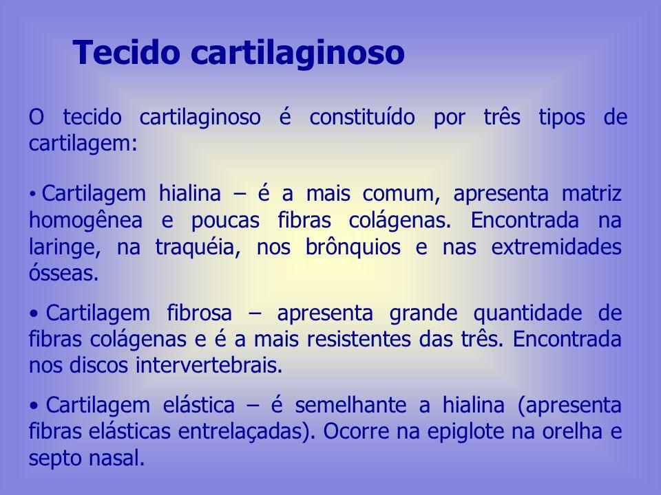 Tecido cartilaginoso Condroplastos – lacunas situadas dentro da substância intercelular, que recebe o nome de matriz cartilaginosa. Matriz cartilagino