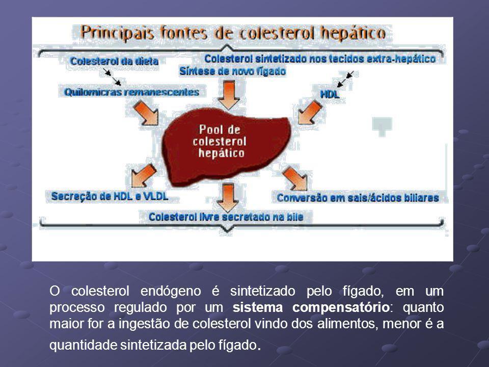 O colesterol endógeno é sintetizado pelo fígado, em um processo regulado por um sistema compensatório: quanto maior for a ingestão de colesterol vindo