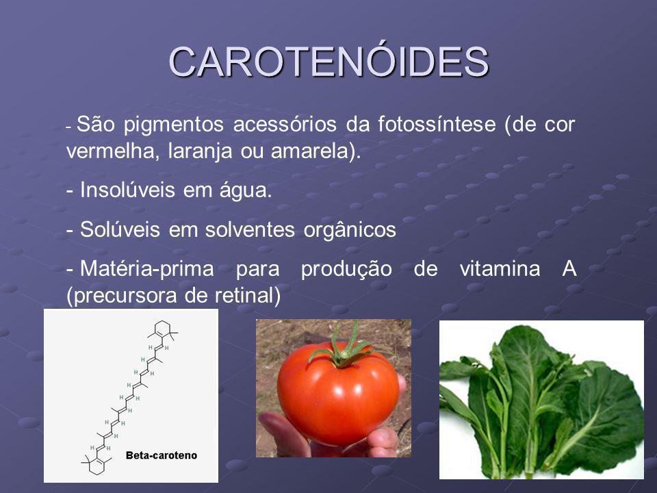 CAROTENÓIDES - São pigmentos acessórios da fotossíntese (de cor vermelha, laranja ou amarela). - Insolúveis em água. - Solúveis em solventes orgânicos