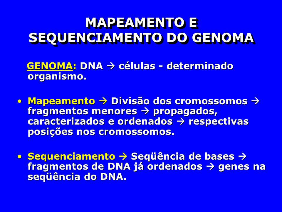 MAPEAMENTO E SEQUENCIAMENTO DO GENOMA GENOMA: DNA células - determinado organismo. GENOMA: DNA células - determinado organismo. Mapeamento Divisão dos