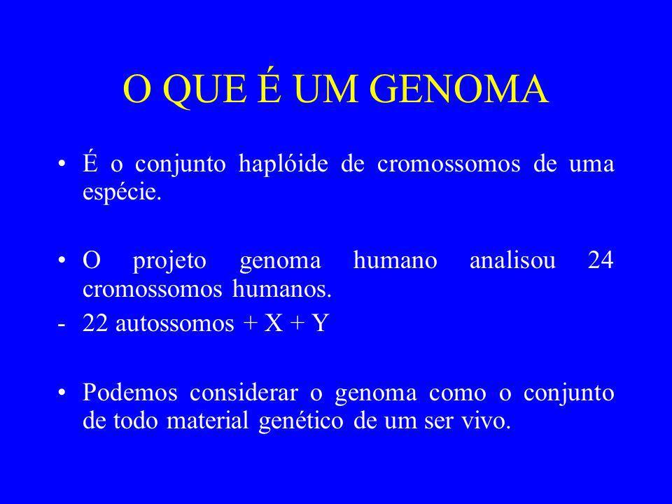 O QUE É UM GENOMA É o conjunto haplóide de cromossomos de uma espécie. O projeto genoma humano analisou 24 cromossomos humanos. -22 autossomos + X + Y
