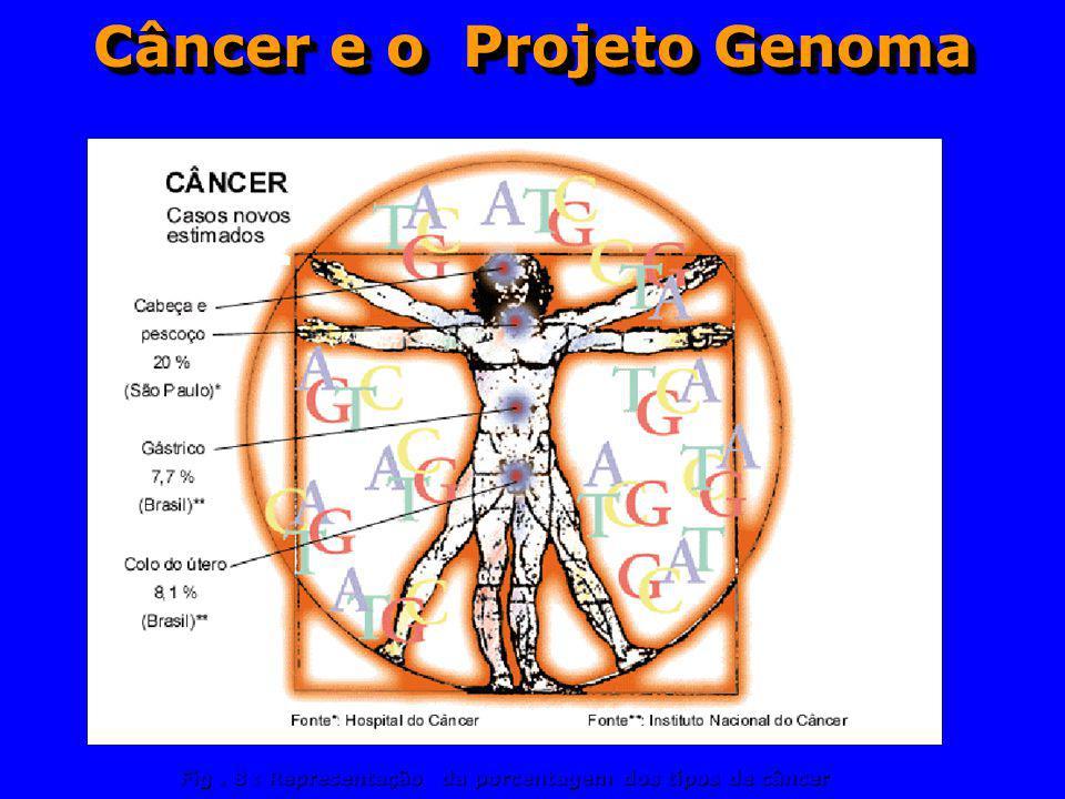 Câncer e o Projeto Genoma Fig. 8 : Representação da porcentagem dos tipos de câncer