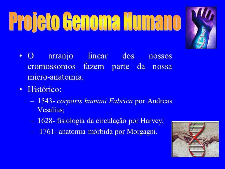 O arranjo linear dos nossos cromossomos fazem parte da nossa micro-anatomia. Histórico: –1543- corporis humani Fabrica por Andreas Vesalius; –1628- fi
