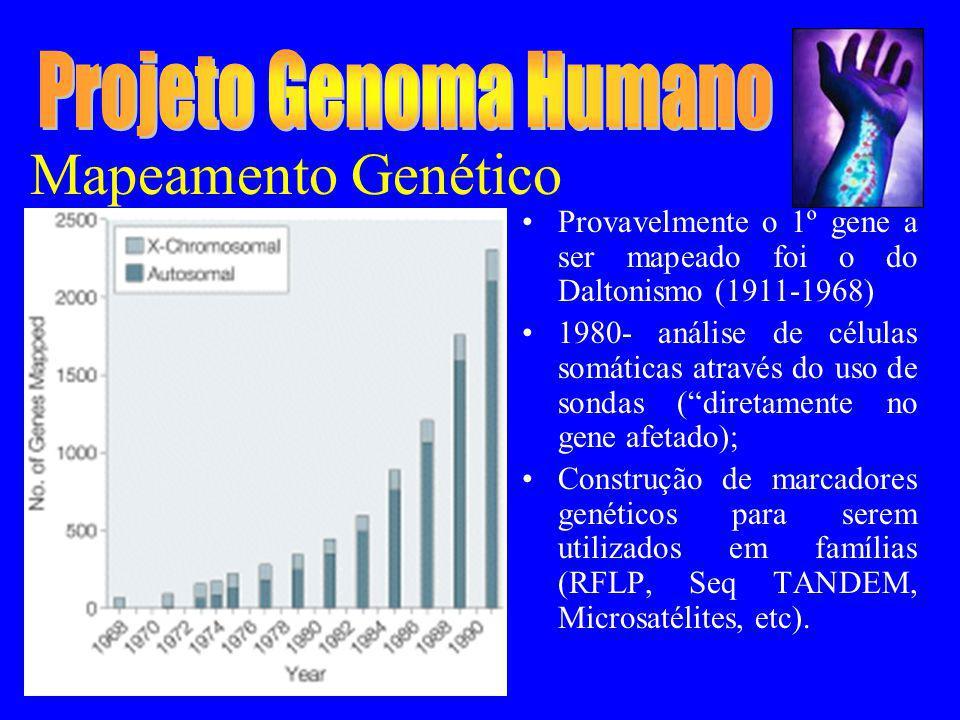 Mapeamento Genético Provavelmente o 1º gene a ser mapeado foi o do Daltonismo (1911-1968) 1980- análise de células somáticas através do uso de sondas