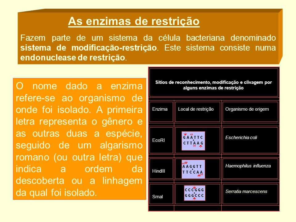As enzimas de restrição Fazem parte de um sistema da célula bacteriana denominado sistema de modificação-restrição. Este sistema consiste numa endonuc